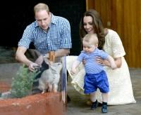 1398185201_prince-william-kate-middleton-prince-george-zoo-zoom