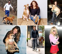 1430326989_1412181414_1409672968_1384363724_celebs-with-their-pets-zoom