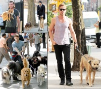 1430501770_hunks-walking-dogs-zoom