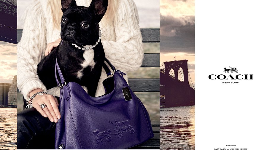 """Miss Asia Kinney is featured in Coach's new campaign, """"Coach Pups"""""""