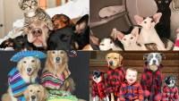 Us Petformers Awards