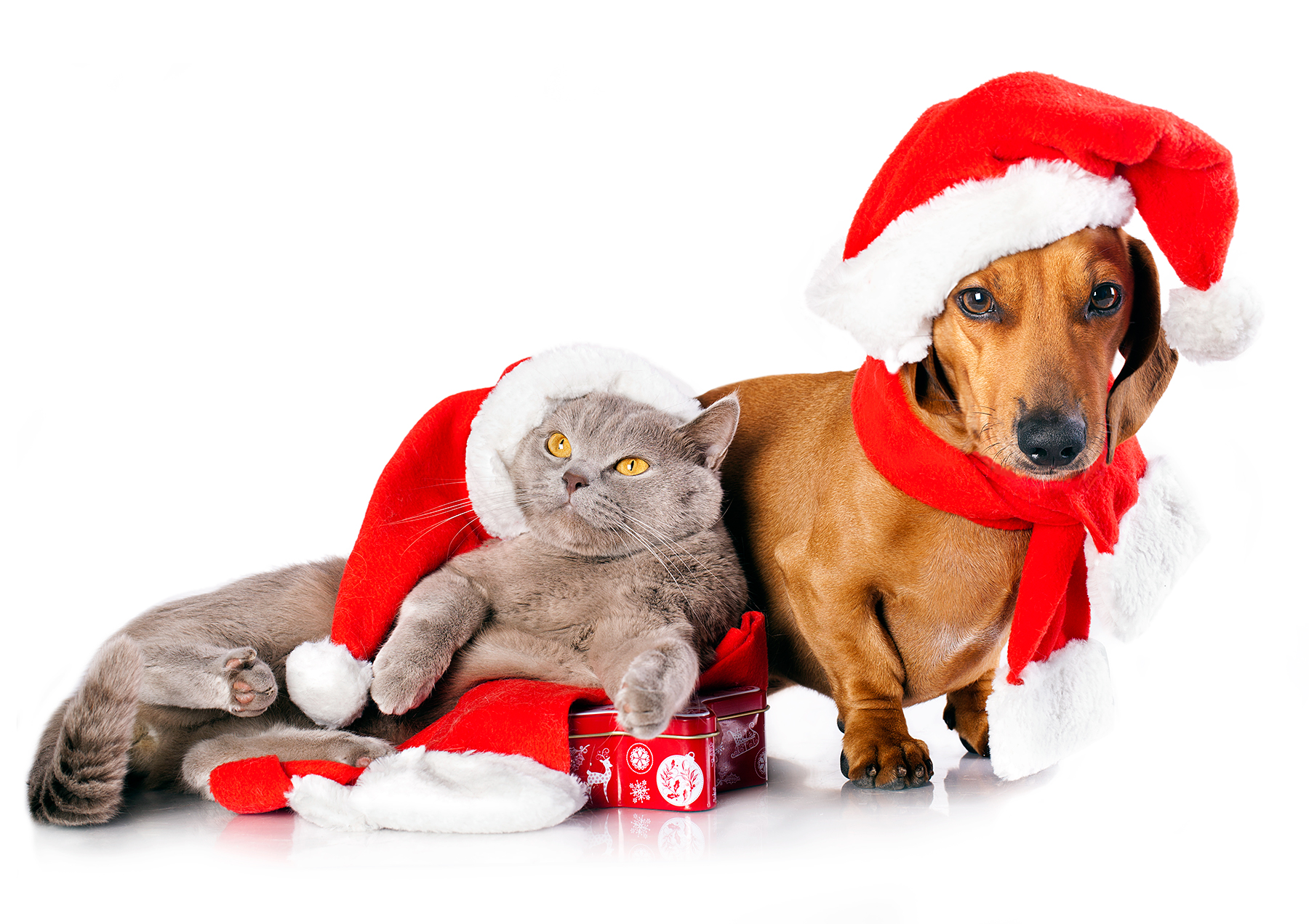 Christmas pet horoscopes