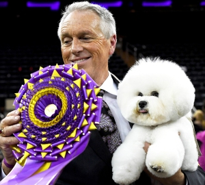 """Flynn the Bichon Frise, with handler Bill McFadden, poses after winning """"Best in Show"""" at the Westminster Kennel Club 142nd Annual Dog Show in Madison Square Garden in New York February 13, 2018."""