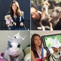Reality TV's Most Popular Pets