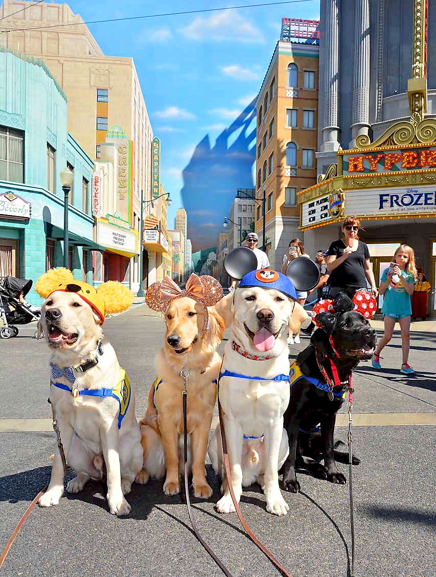 Canine Companions for Independence Disneyland