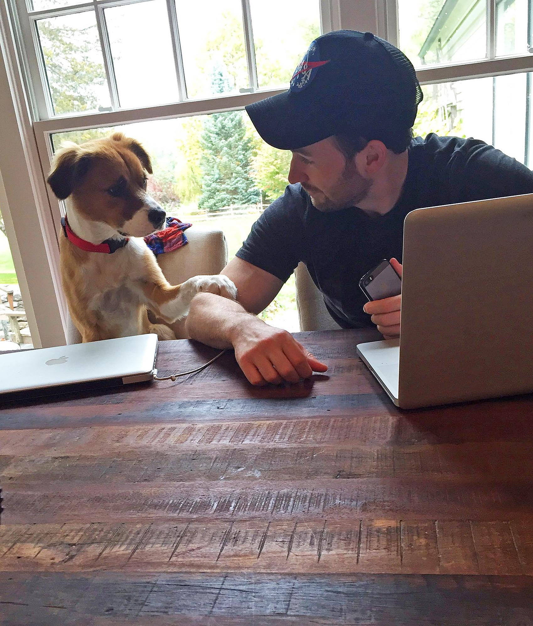 Chris Evans rescue dog