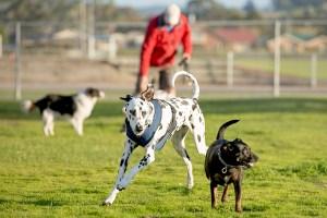 dog-at-park
