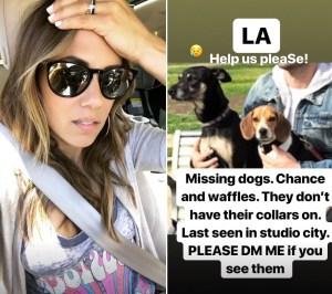 jana-kramer-missing-dogs