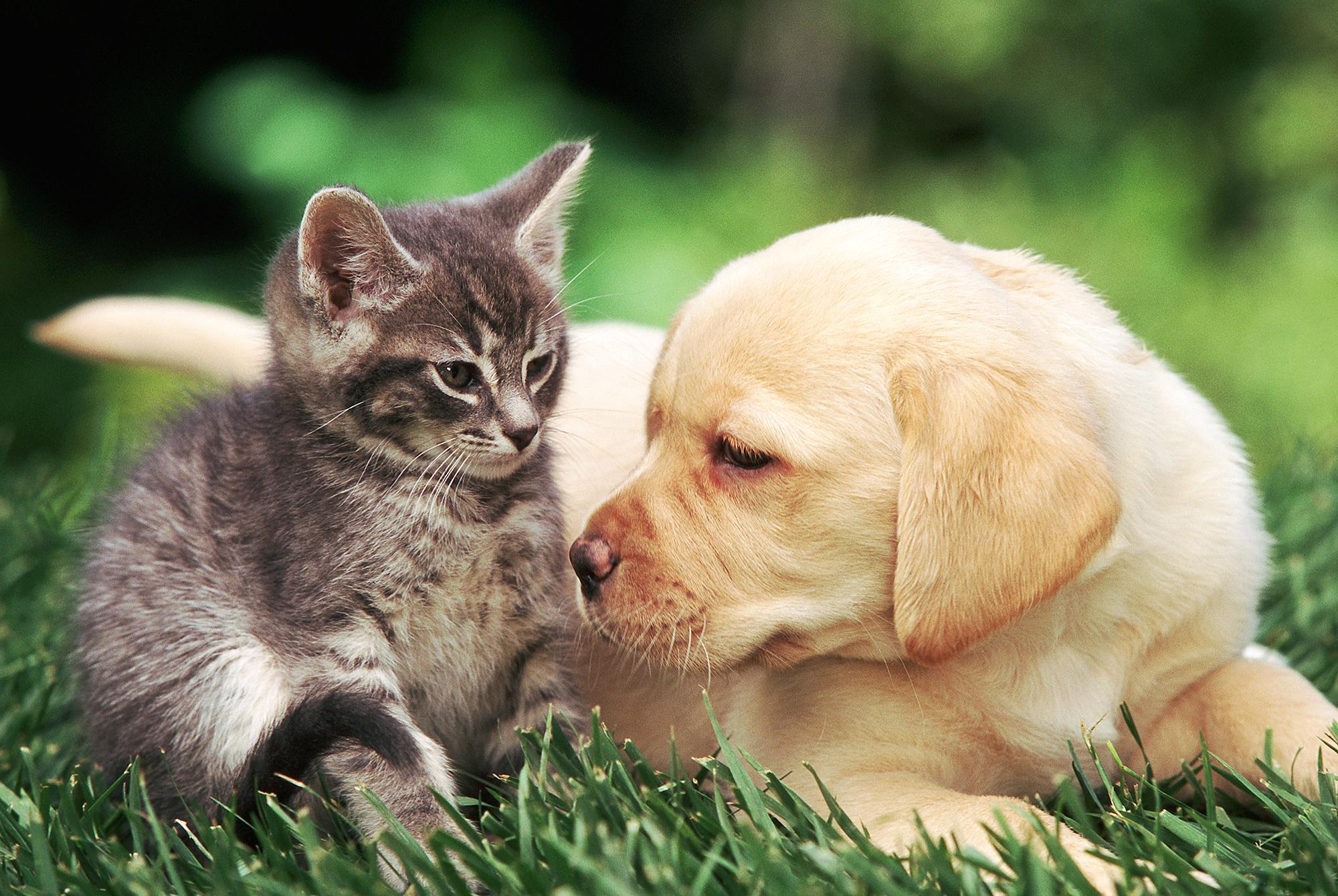 puppy kitten adoption