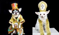 Met Gala Dogs Anthony Rubio