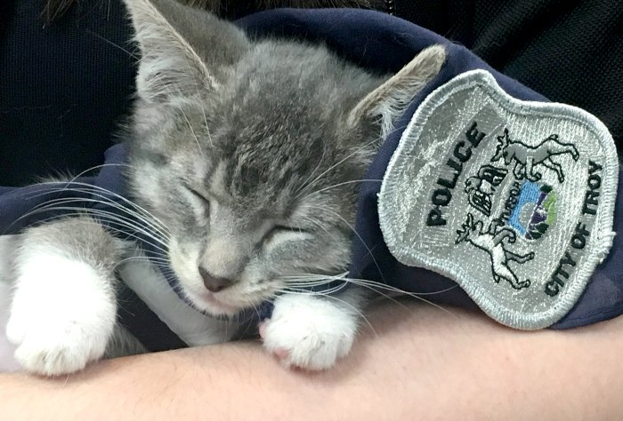 Pawfficer-Donut