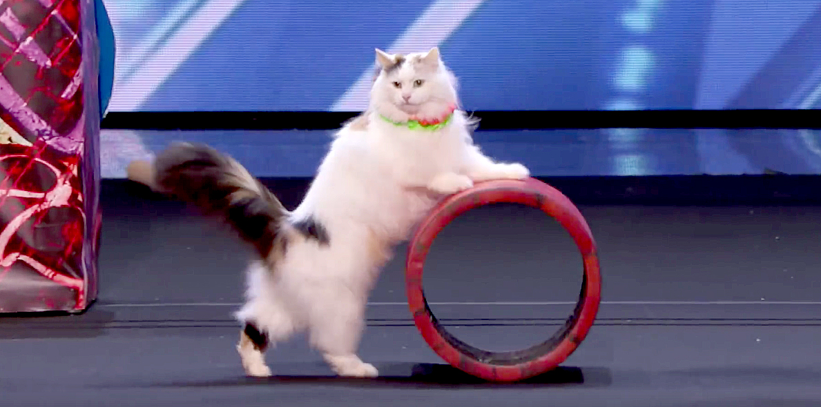 Cats Demonstrate Talent on TV Show