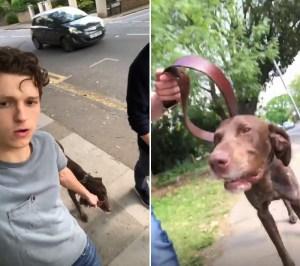 Tom-Holland-stray-dog