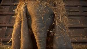'Dumbo' teaser trailer