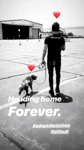 Justin Theroux and Kuma Instagram Story