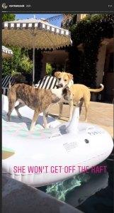 Kaley Cuoco dogs pool