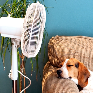 A dog stays cool by a fan.