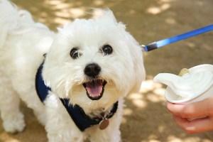 PetSmart celebrates National Ice Cream Day