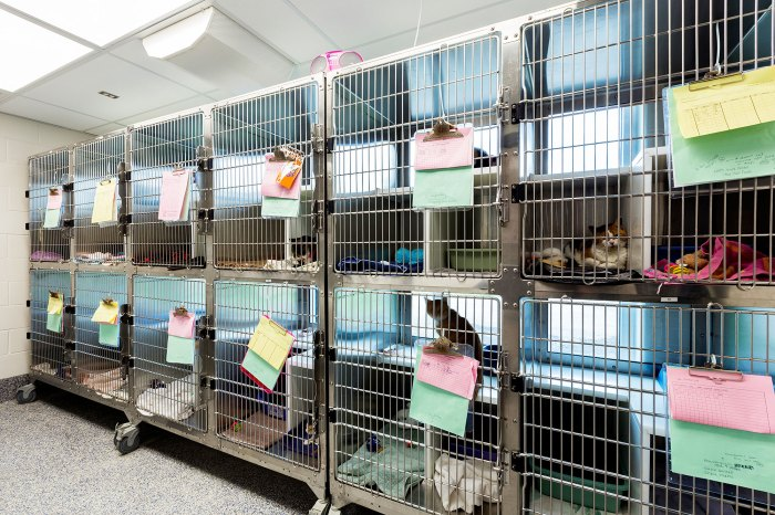 Clear the Shelters Wants to Help All Animals in Need Find Homes