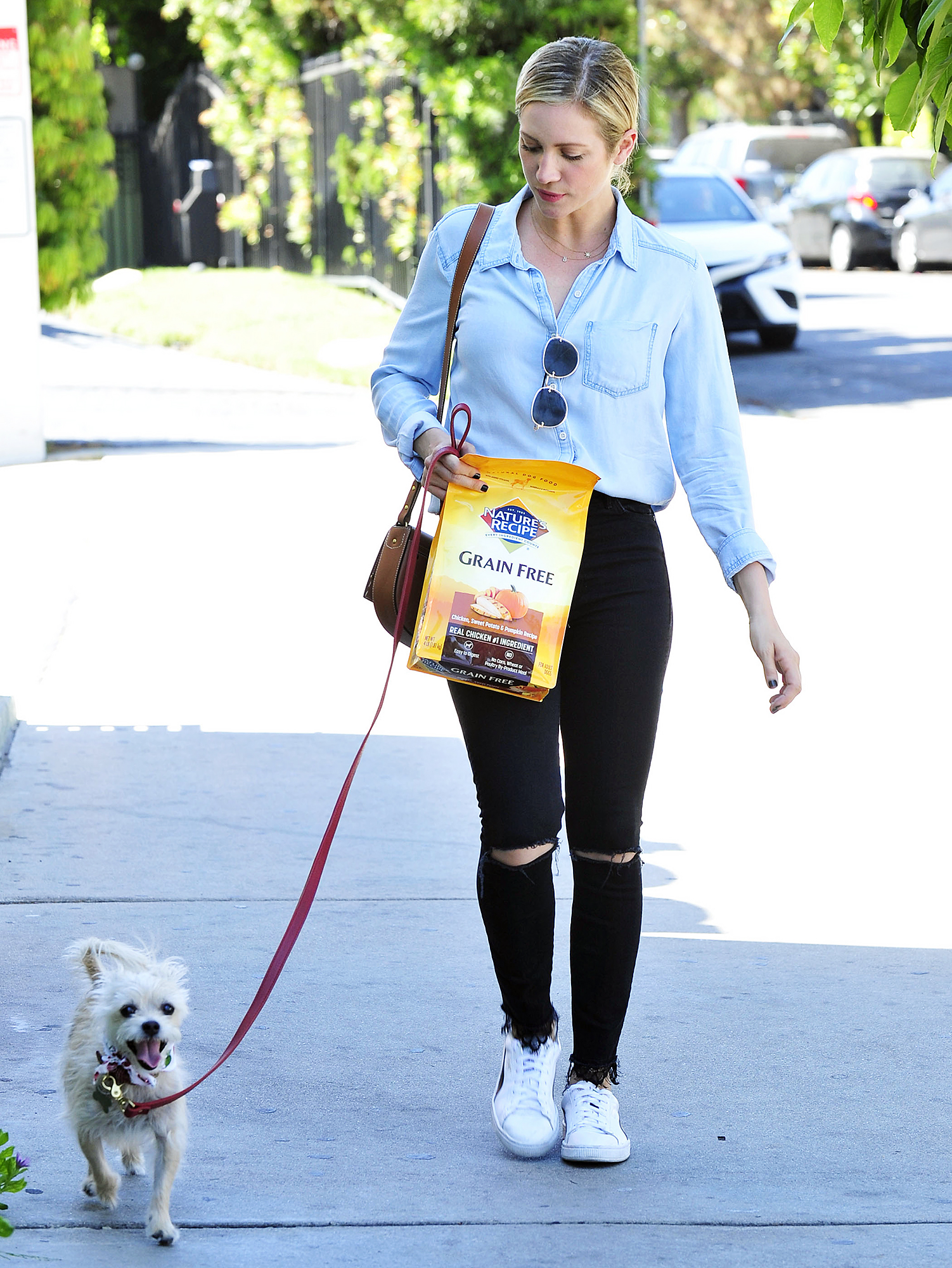Brittany Snow Nature's Recipe premium dog food