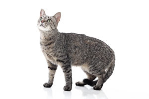 new Zealand cat ban
