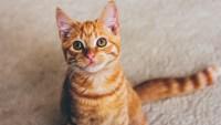 cute cate names