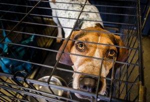 dog hurricane safe pets