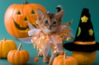 10 Must-Have Pet Halloween Costumes that Will Get All the Giggles