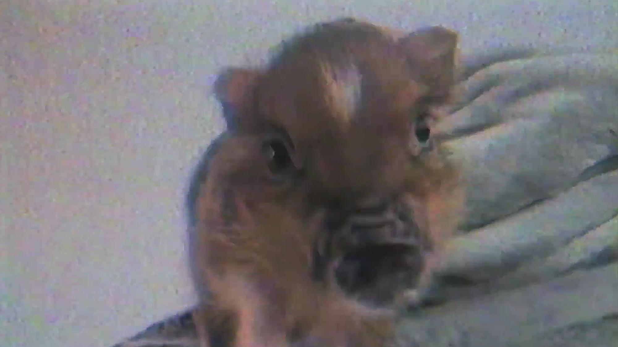 Ariana Grande Piggy Smalls Breathin Music Video