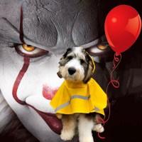 IT-dog-costume