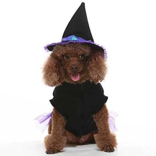 dog witch costume