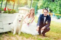 Bride and Groom Posing with their white samoyed dog at wedding.