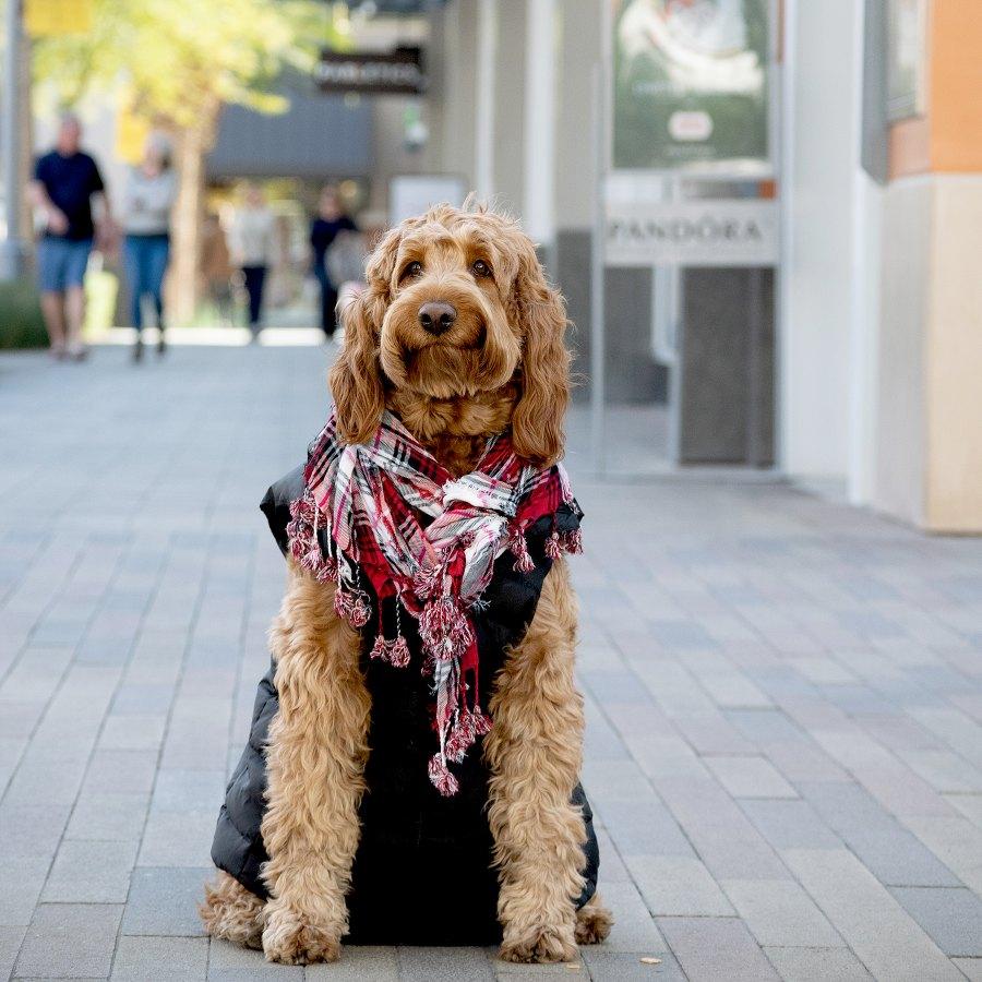 Murphy dog
