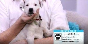 Rescue Me November Dog Rescue