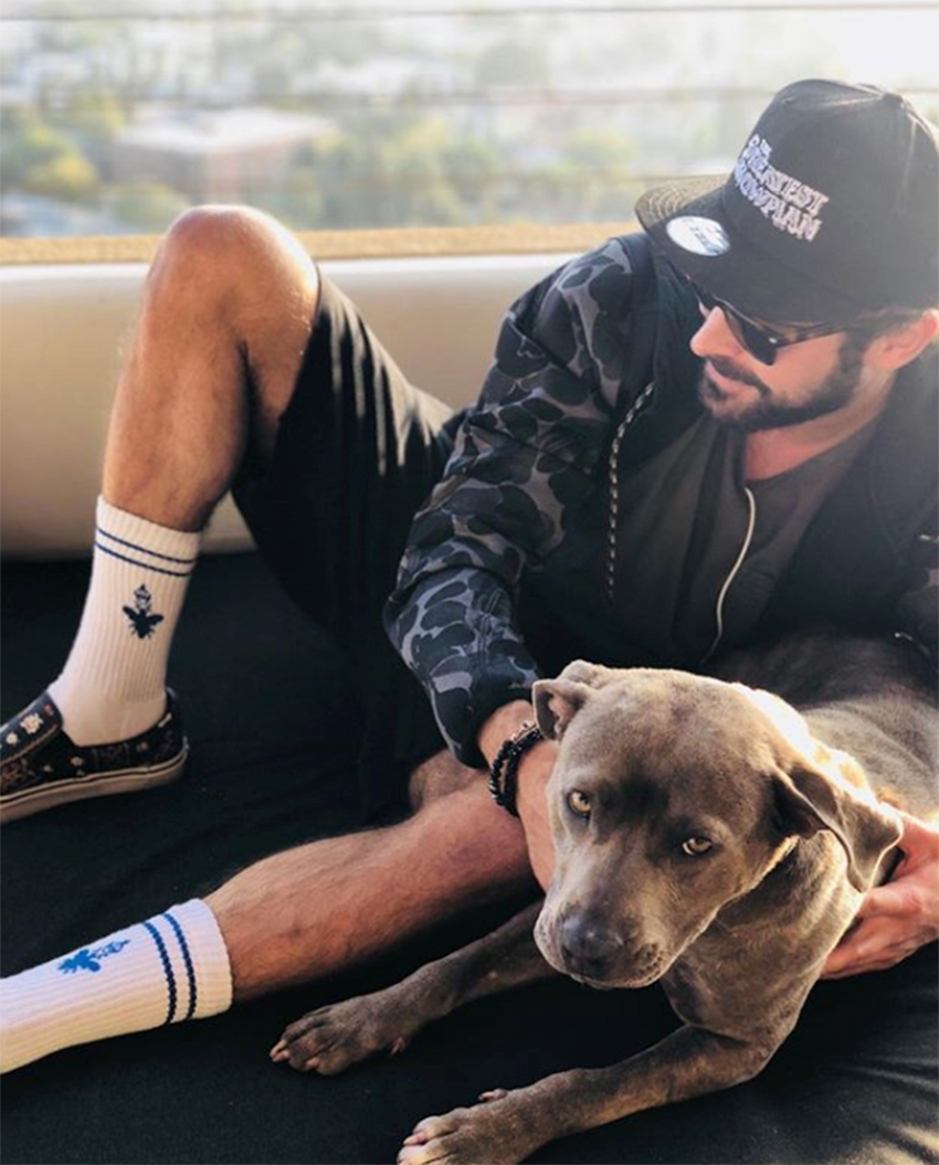 celebs who have adopted dogs