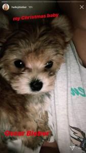 Justin Bieber and Hailey Baldwin Get a Puppy
