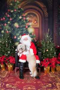 Pet-to-Pose-with-Santa