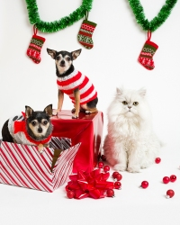 christmas-cat-dog-gifts