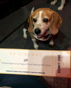Dog-Friendly Movie Theater Opens in Texas With Food for Canines and Humans