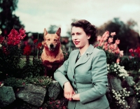 All About Queen Elizabeth II's Love for Animals