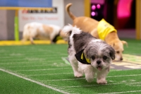 starting lineup puppy bowl 2019 animal planet