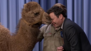 Jimmy Fallon Gets Kissed by a Baby Camel
