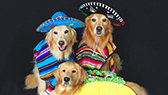 three dogs dressed in colorful sombreros and ponchos