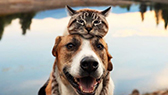 Tabby cat leaning head on brown and white dog near lake