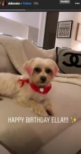 demi-lovato-dog-ella-birthday