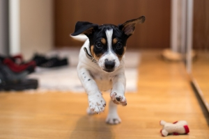 Dogs' Personalities Change Over Time to Mimic Their Owners, New Study Says