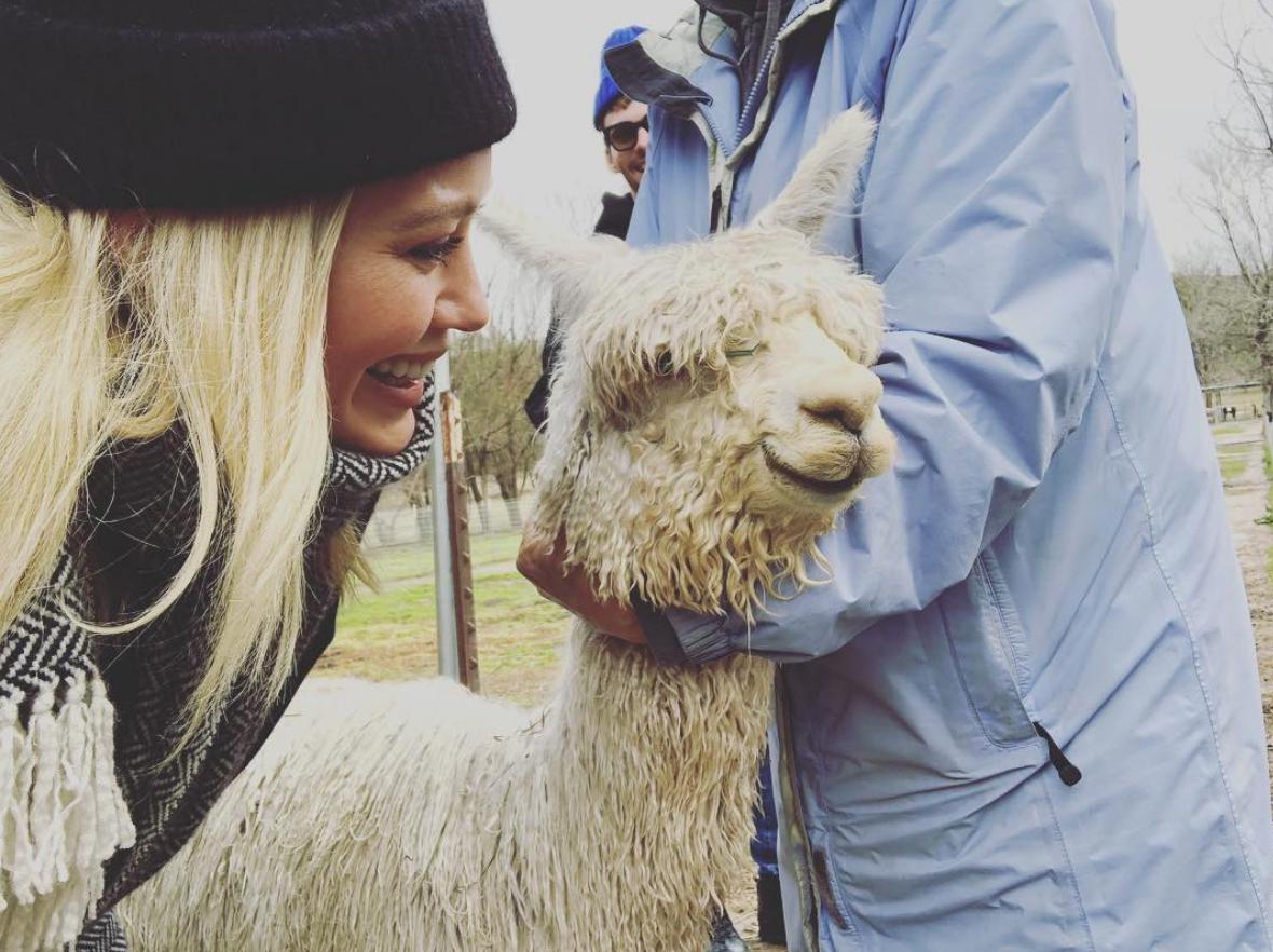 Hilary-Duff-Gets-Alpaca