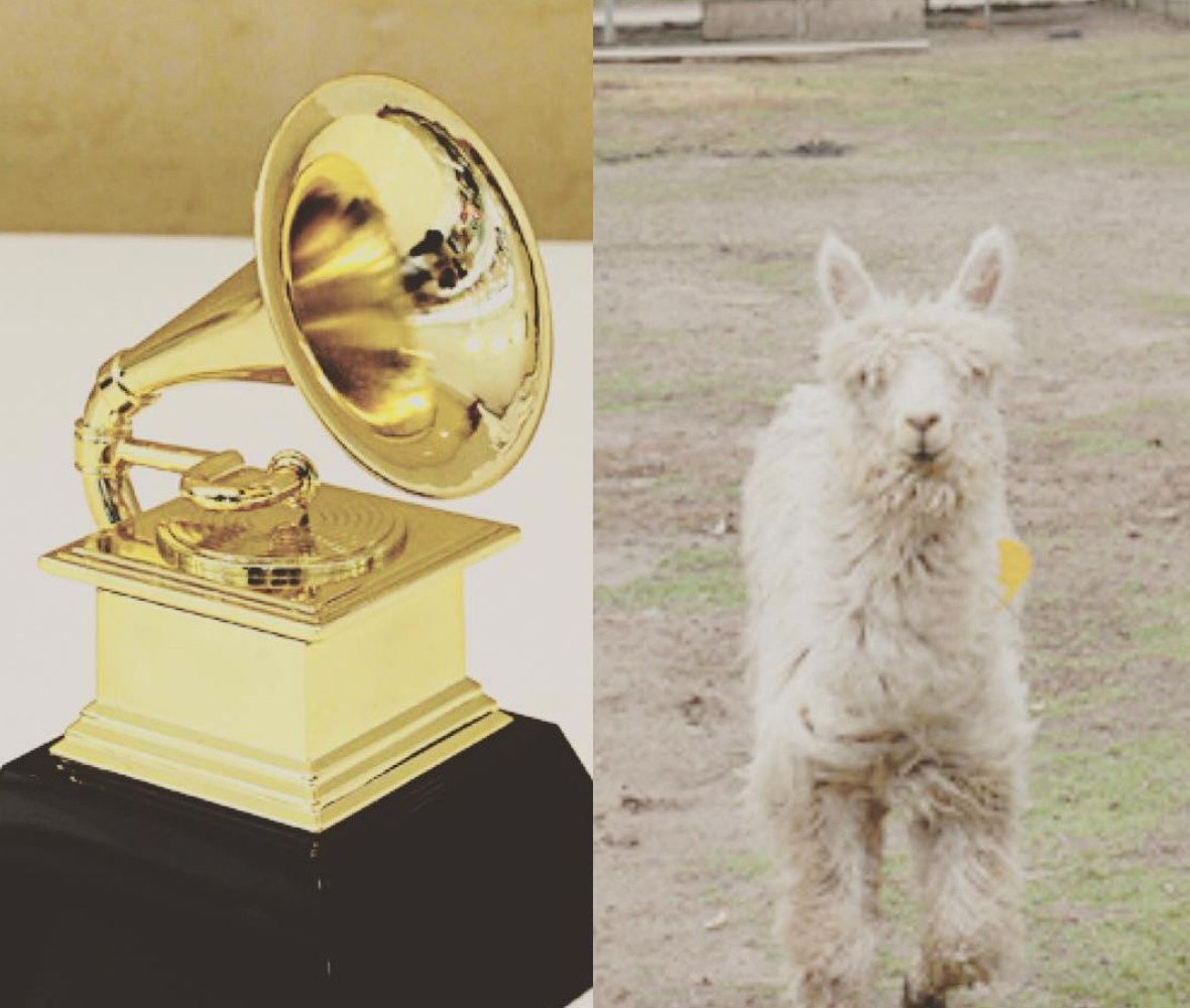 """Hilary-Duff-Gets-Alpaca - Duff joked about having a better day than winners at the 2019 Grammy Awards on Sunday, writing, """"Soooooo many Grammys only ONE Ivan."""""""