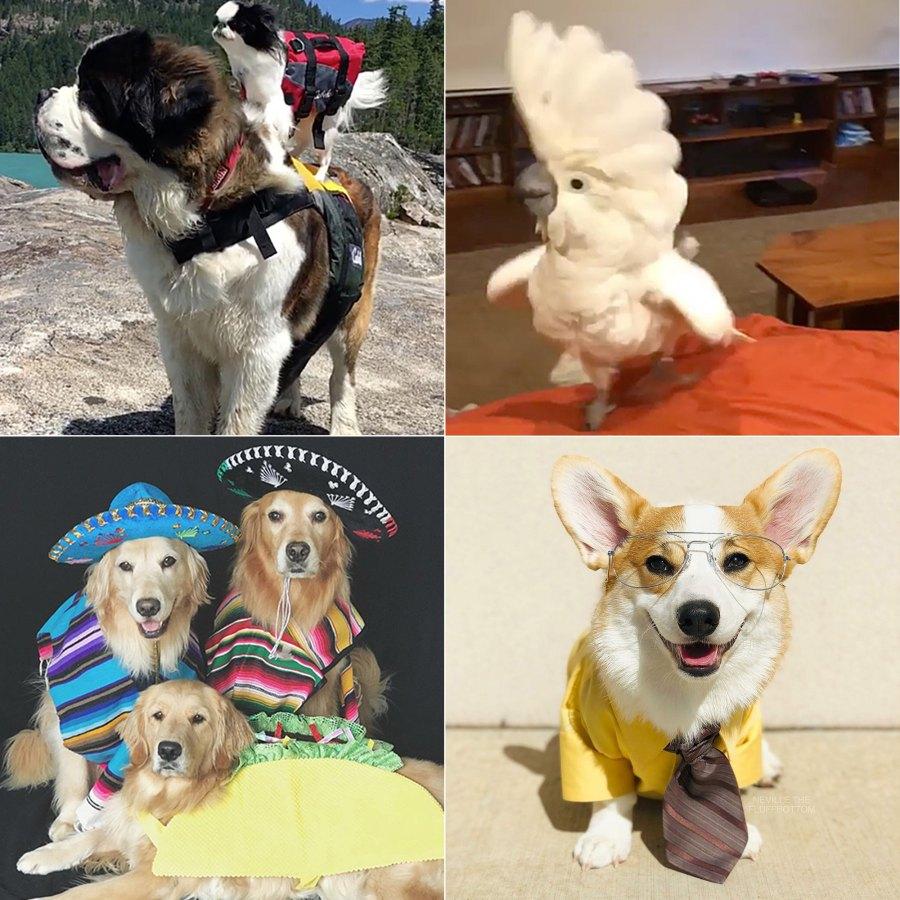 Us Weekly's Petformers Awards: See the Complete Winners List!