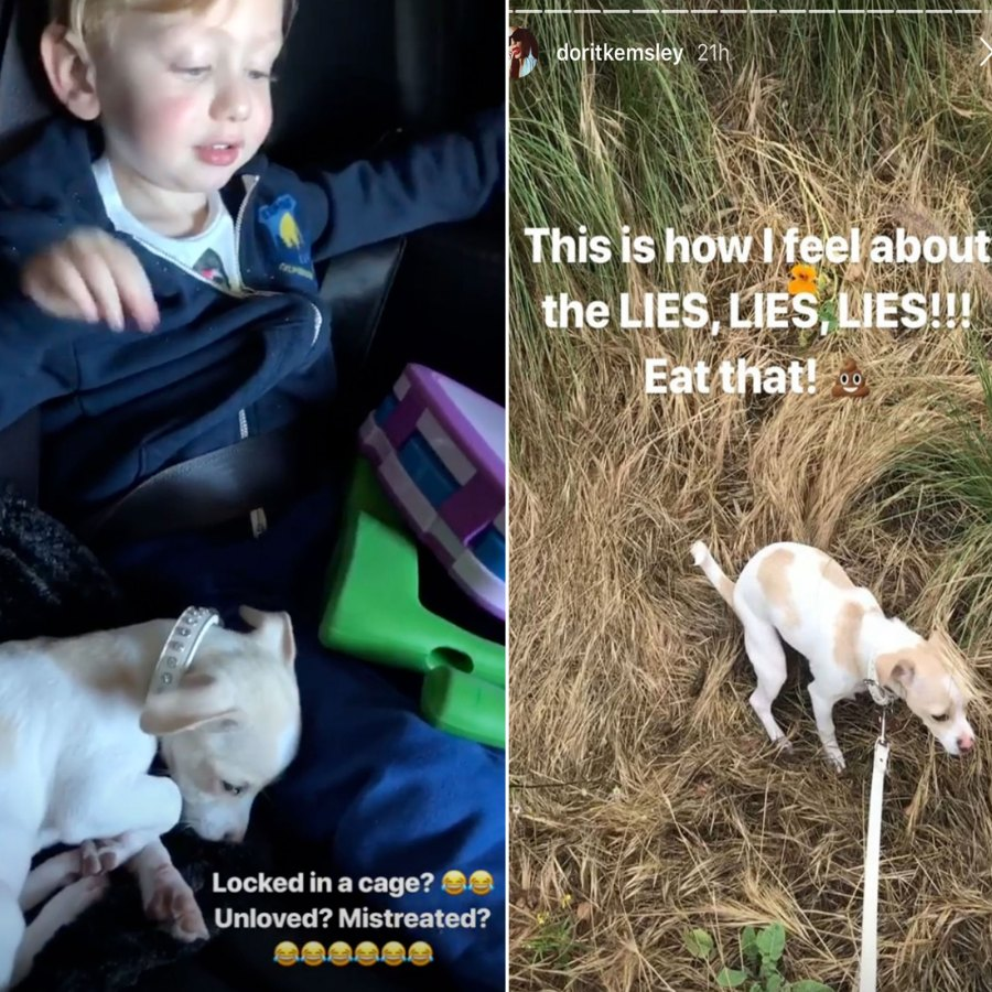 Dorit Kemsley Posts Proof She Didn't Mistreat Dog Lucy Amid PuppyGate
